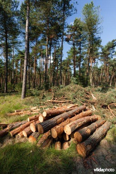 Uitgedund bos