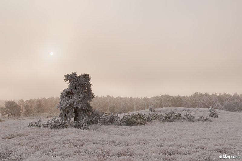 Berijpt landschap op de Veluwezoom